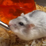 How Long Can Gerbils Go Without Water?