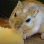 Can Gerbils Eat Apples? Do They Like Them?