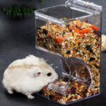 Can Gerbils Eat Hamster Food? Is It Safe For Them