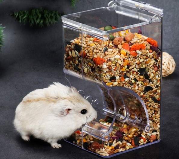 Can Gerbils Eat Hamster Food