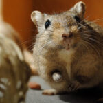 How to Get Rid of Fleas on a Gerbil | The Easy Way